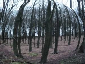 Bare Trees Spherised