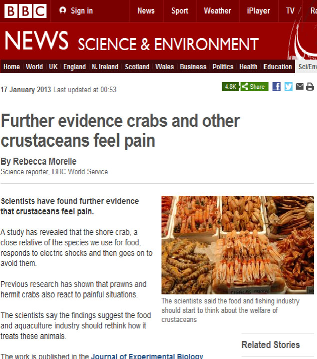 crustaceans feel pain bbc report